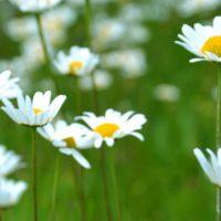 blomster_virginia-lackinger-JV0y2YgXJcY-unsplash